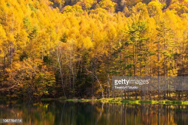 mishaka pond in autumn - 季節 ストックフォトと画像