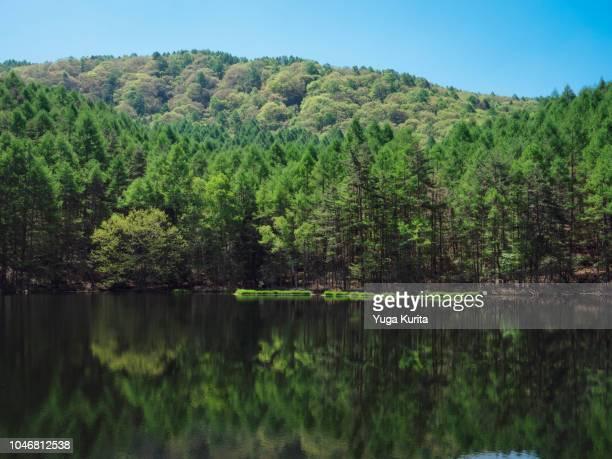 mishaka-ike pond in nagano prefecture - paisajes de japon fotografías e imágenes de stock