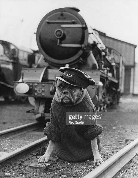 Mishka a boxer and a guard dog on the Romney Hythe and Dymchurch railway line in Kent braves the cold in a sweater and cap whilst carrying out his...