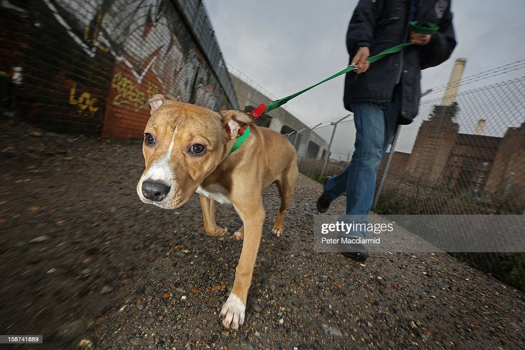 The Rehoming And Rehabilitation Of Unwanted Dogs And Cats During The Christmas Holiday : News Photo