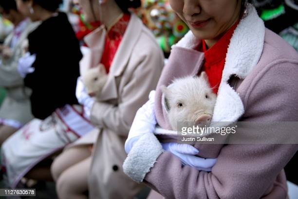 Miss Chinatown USA contestant holds a piglet while ushering in Chinese New Year on February 05 2019 in San Francisco California San Francisco city...