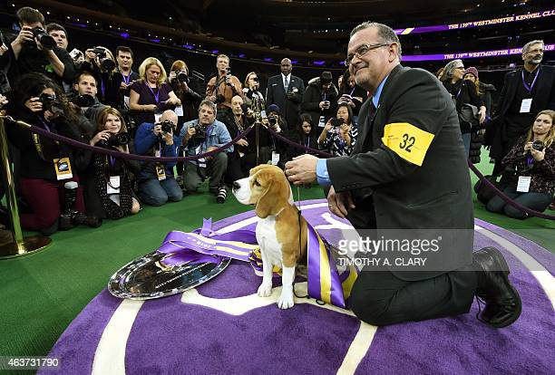 Miss P a 15 inch Beagle with handler William Alexander wins 'best in show' of the 139th Annual Westminster Kennel Club Dog Show at Madison Square...