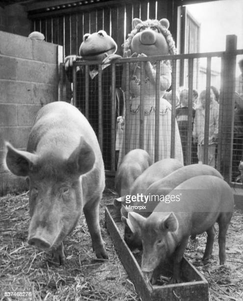 Miss Piggy and Kermit the frog dropped in for a chat with some Tamworth pigs at Bill Quay Farm