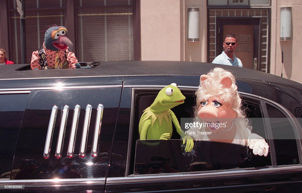 Miss Piggy, Kermit and Gonzo arrive by limousine  News Photo