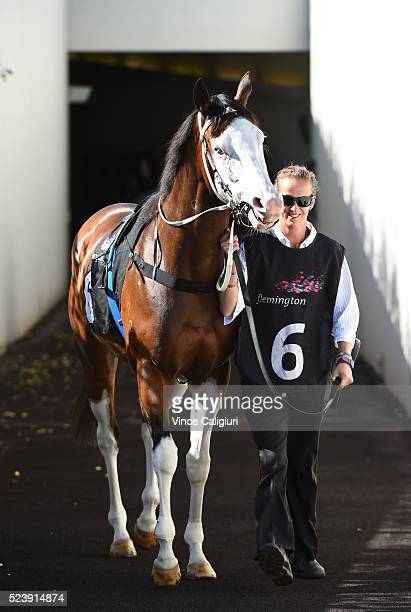Miss Vista walks to the mounting yard before winning Race 1 The Euroa VC's Handicap during Melbourne ANZAC Day Racing at Flemington Racecourse on...