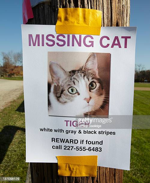 missing cat poster - lost stock pictures, royalty-free photos & images