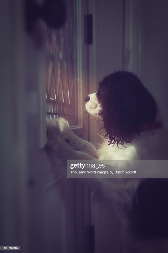 Missing Mommy : Stock Photo
