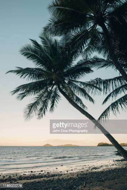 mission beach palm - twilight stock pictures, royalty-free photos & images