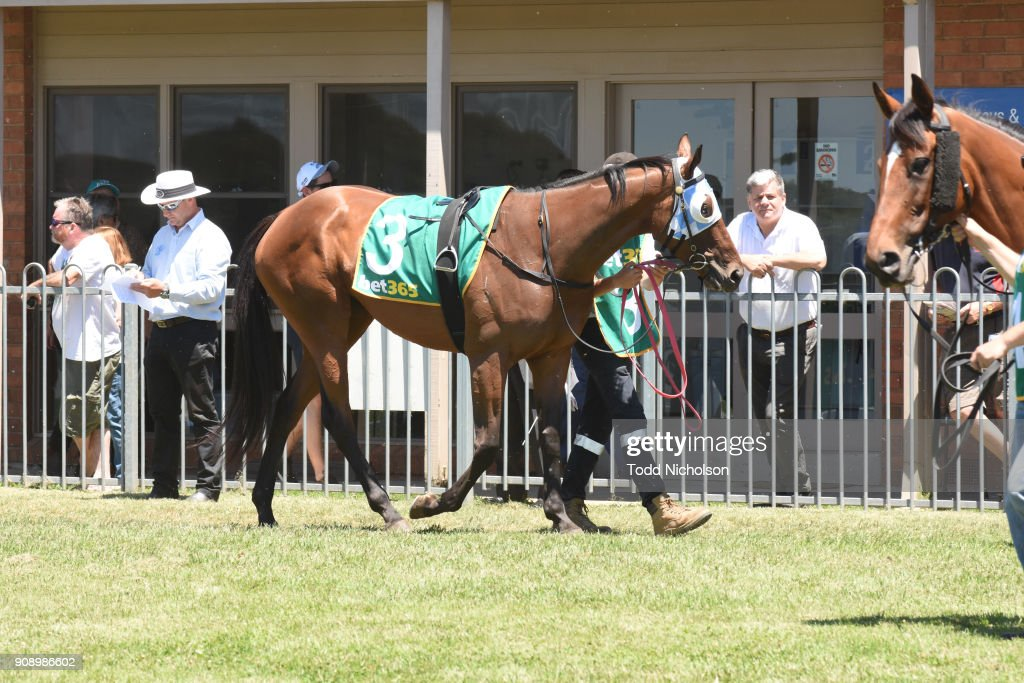 Terang Racing Club Race Meeting