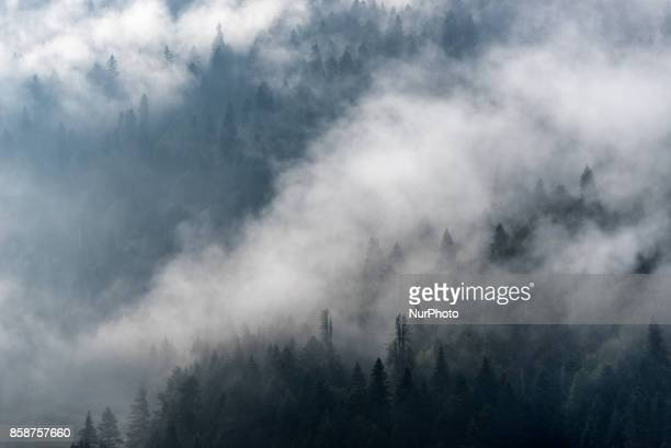 Mist and fog floats through a hilly pine forest in the Lake Abant Nature Park in Mudurnu Bolu Turkey on 30 Sept 2017