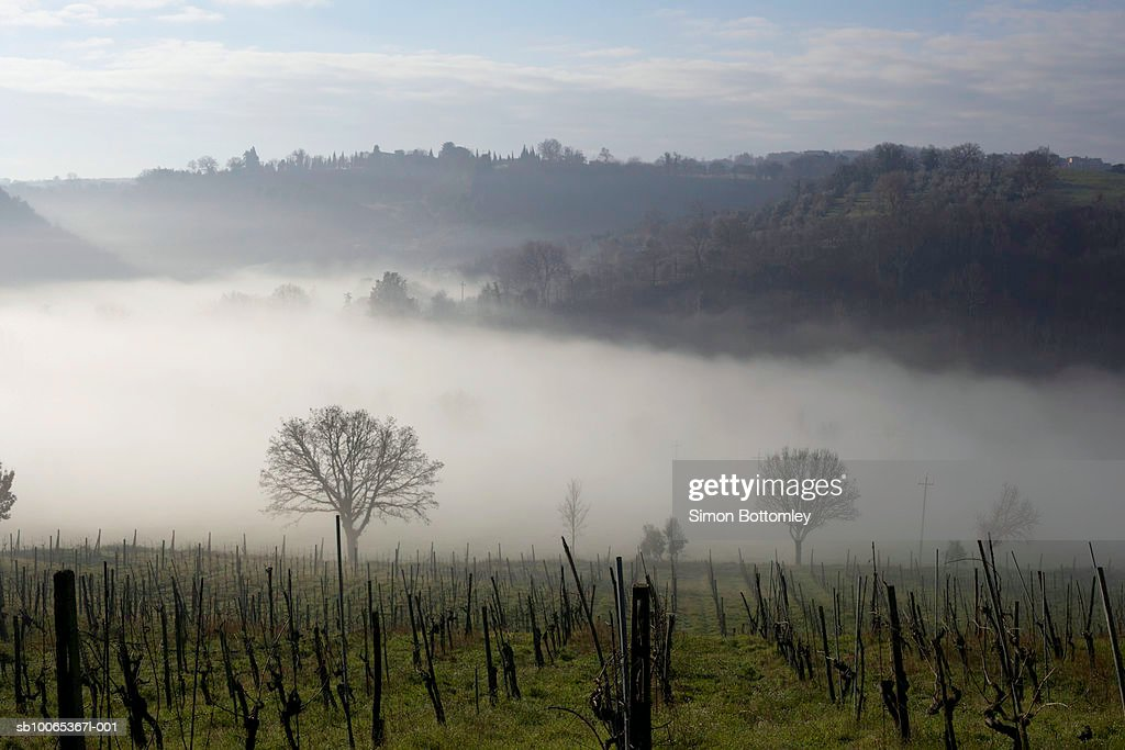Mist in valley : Foto stock