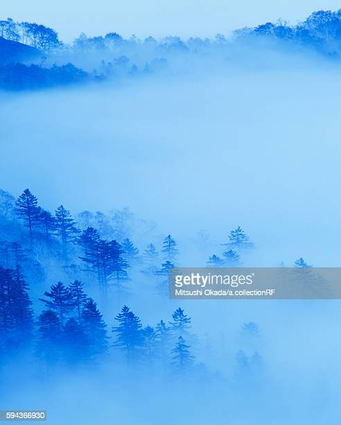Mist over forest