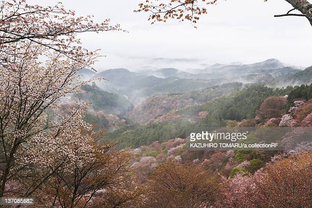 Mist Over Mountain Ranges in Spring