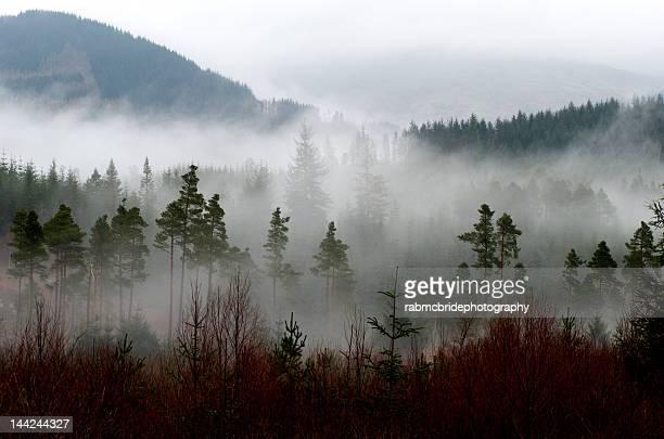 Mist over Trossachs