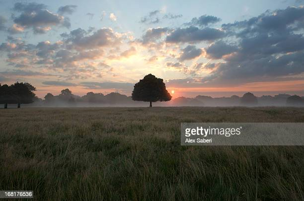 mist rising and a solitary tree under a dramatic dawn sky. - alex saberi stockfoto's en -beelden