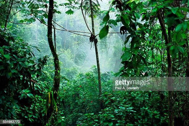 mist rising in rainforest - 熱帯雨林 ストックフォトと画像