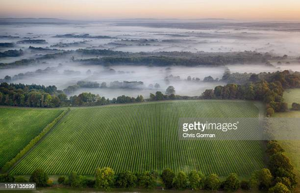 Mist rolls across The Nyetimber Vineyard on England's South Downs in September 2019 in Petworth United Kingdom