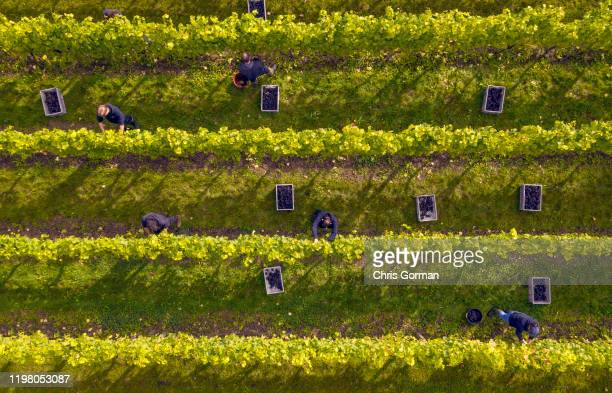 Mist rolls across The Nyetimber Vineyard on England's South Downs on September 27 2019 in Petworth United Kingdom