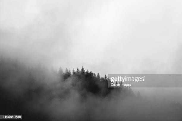mist swirls around a mountain covered in pine trees in washington - cascade range stock pictures, royalty-free photos & images
