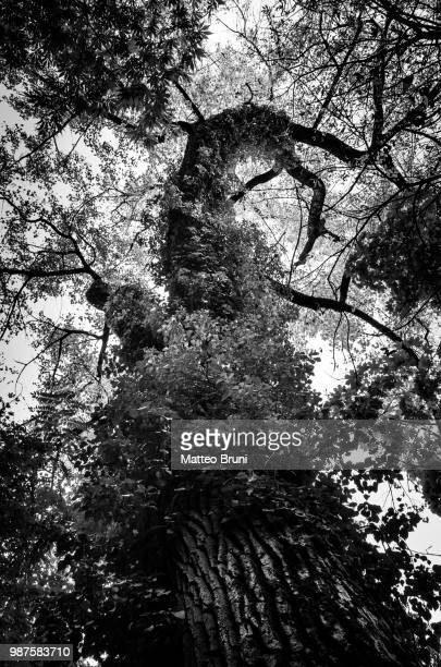 mistery tree - mistery foto e immagini stock