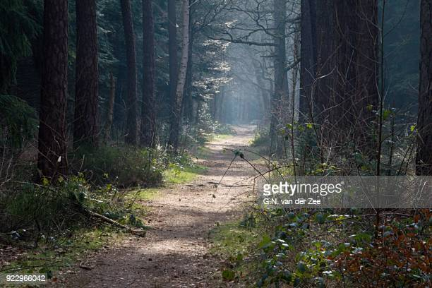 mistic light - drenthe stock pictures, royalty-free photos & images