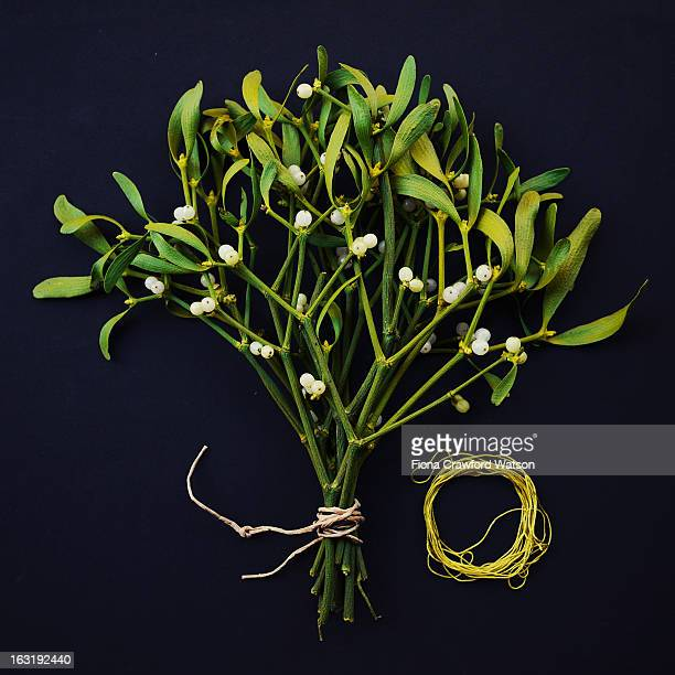 mistletoe and berries on black background - what color are the berries of the mistletoe plant stock pictures, royalty-free photos & images