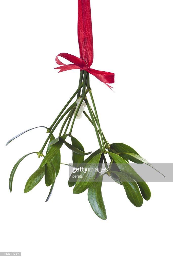 mistletoe bunch : Stock Photo