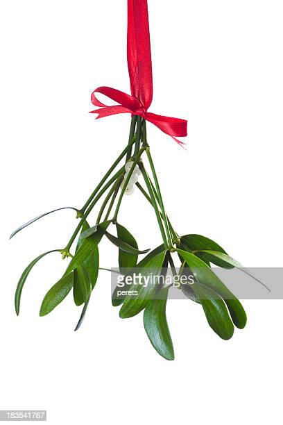 mistletoe bunch - what color are the berries of the mistletoe plant stock pictures, royalty-free photos & images