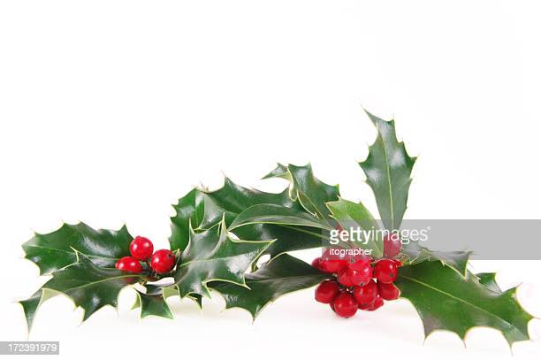 mistletoe during christmas on white background - holly stock pictures, royalty-free photos & images