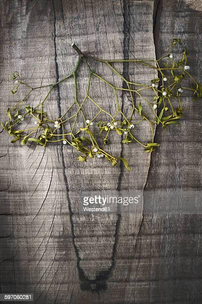 Mistletoe hanging on wooden wall