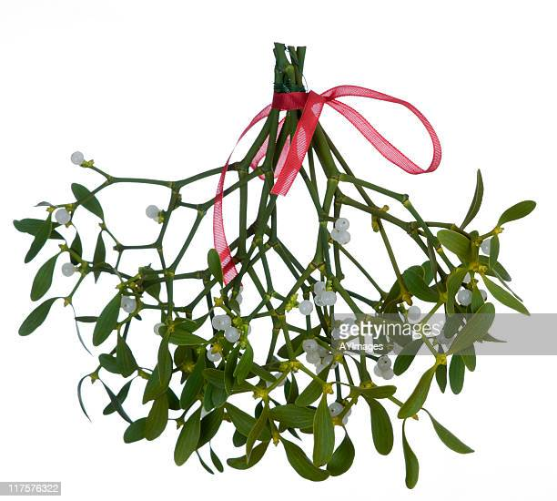 Mistletoe (Viscum album) on white background