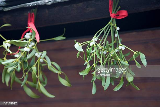 mistletoe - what color are the berries of the mistletoe plant stock pictures, royalty-free photos & images