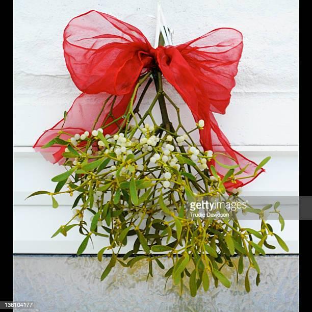 mistletoe - mistletoe stock photos and pictures