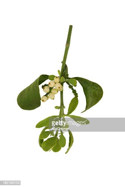 mistletoe - mistletoe stock photos and pictures