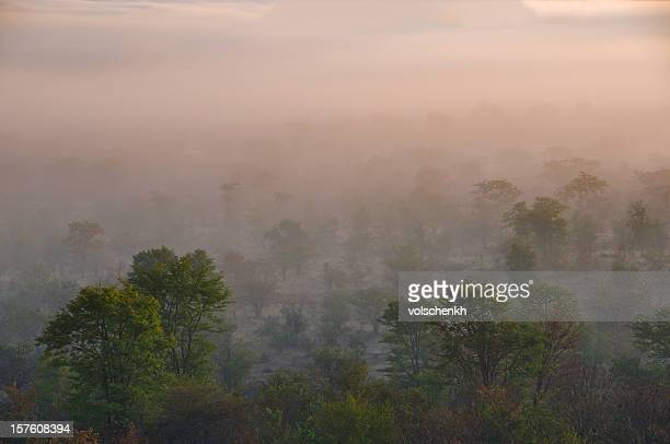 Misty African Bush