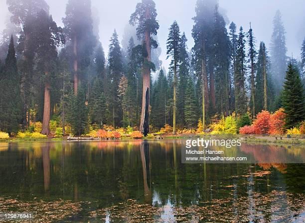 Misty autumn- balch park