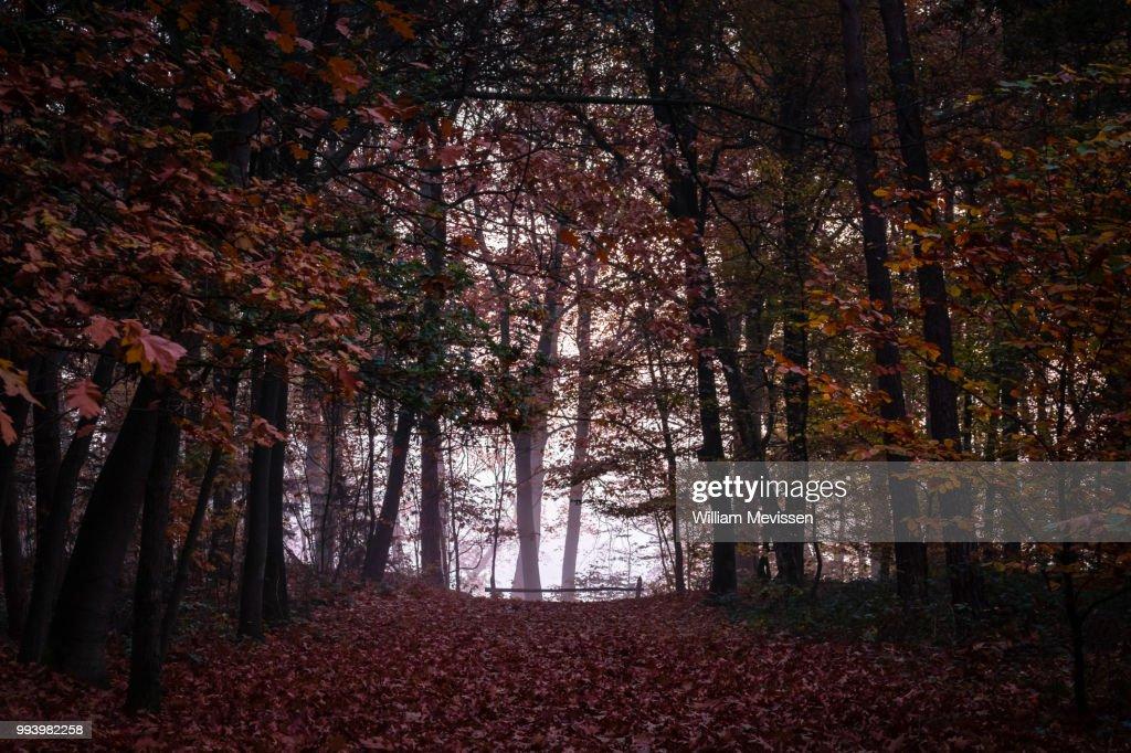 Misty Autumn Silhouettes : Stockfoto