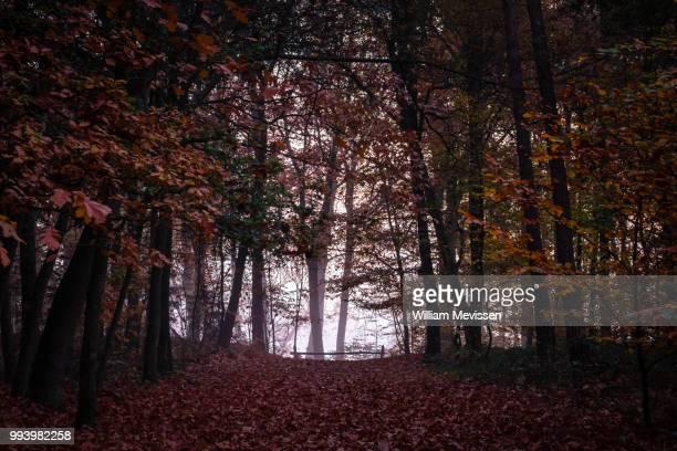 misty autumn silhouettes - william mevissen stockfoto's en -beelden