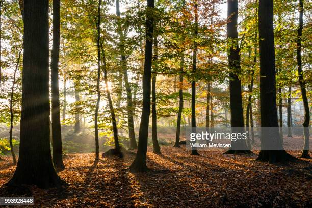 misty autumn sunrise - william mevissen stock pictures, royalty-free photos & images