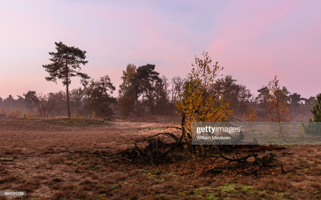 Misty Autumn Twilight : Stockfoto
