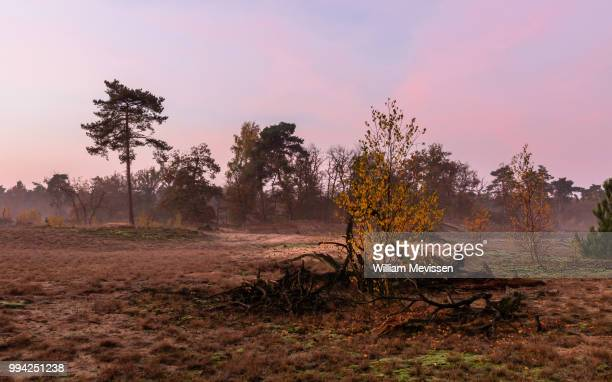 misty autumn twilight - william mevissen fotografías e imágenes de stock