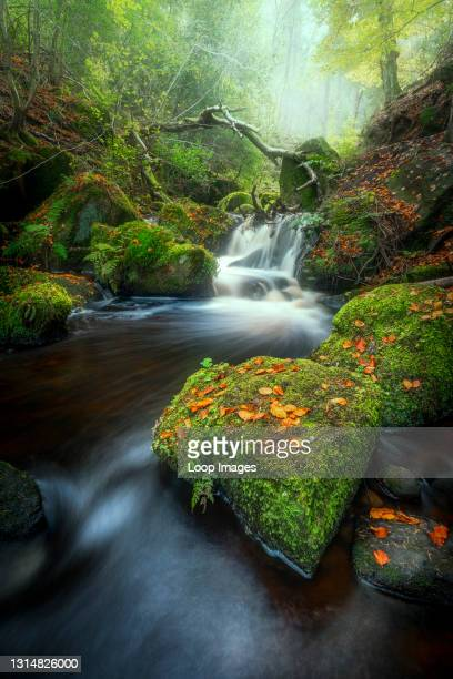 Misty Autumn woodland scene at Wyming Brook.