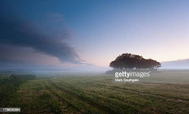 misty copse - blyth northumberland stock pictures, royalty-free photos & images
