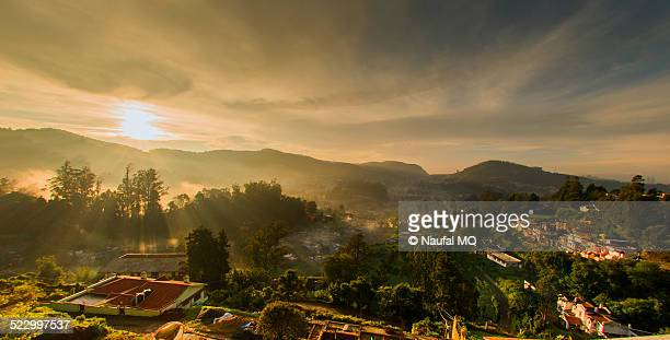 misty dawn in ooty - tamil nadu stock pictures, royalty-free photos & images