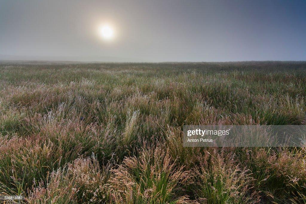 Misty dawn in the field : Foto stock