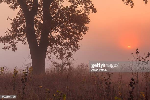 misty dawn in the forest - anton petrus stock pictures, royalty-free photos & images