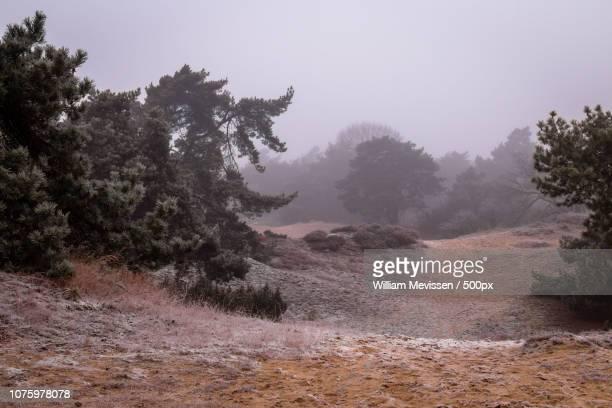misty dunes - william mevissen stockfoto's en -beelden