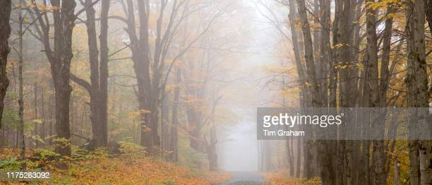 Misty empty road in The Fall in Vermont New England USA