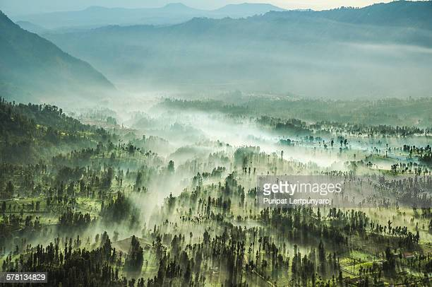 Misty forest - East Java, Indonesia