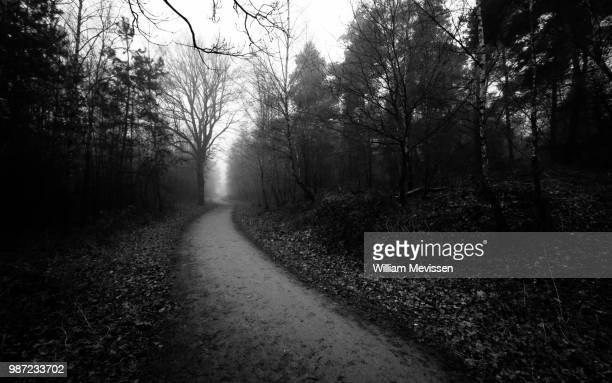 misty forest lane 'b&w' - william mevissen stock pictures, royalty-free photos & images